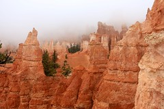 IMG_2914 (Geology Joel) Tags: fog hoodoos brycecanyon bryceamphitheater geology rocks nature nationalparks utah desert weather unique hike trails rain
