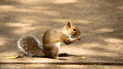 (Jean Haldane) Tags: parque florida canon sigma 18135 ferias vacation tampa bush gardens animal esquilo