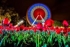 Floriade At Night-13 (Quick Shot Photos) Tags: act australia canberra canon floriade nsw theresa parkes australiancapitalterritory au
