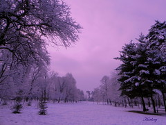 Purple winter (Harlory) Tags: winter light tree nikon purple romania coolpix craiova p100 romanescu nikonp100