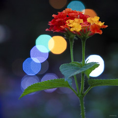 Colorful spring (-clicking-) Tags: lighting flowers light art nature floral garden spring colorful dof natural blossom bokeh vivid bloom multicolors blooming springgarden floralart supershot colorsonblack colorphotoaward 100commentgroup