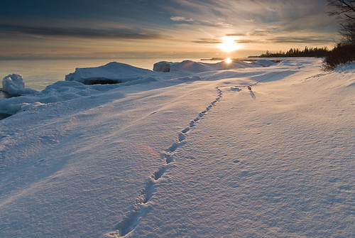 Deer Trail on Snowy Beach