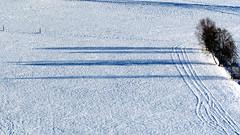 Lange Schatten (mikiitaly) Tags: schnee schatten baum pfitschtal flickrchallengewinner