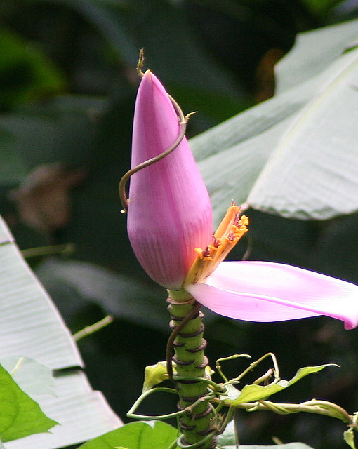 manoa falls flower by VC3 Employee Photos