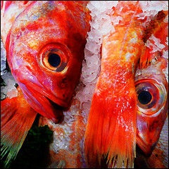 Roly poly fish heads...and tails (1crzqbn~away) Tags: fish color macro ice square song contemporaryart fishheads lettuce pikeplacemarket drdemento redsnapper hss seattlewa coth vividimagination rolypolyfishheads barnesandbarnes awardtree coth5 1crzqbn sliderssunday rolypolyfishheadsandtails extraordinarilyimpresive