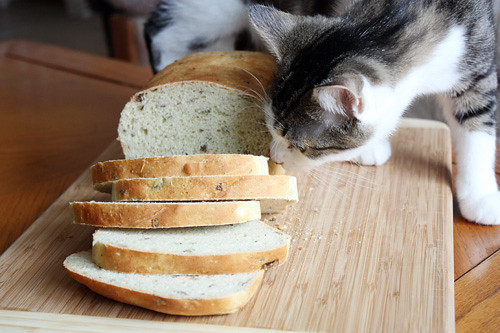 percy + the bread.