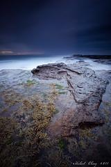 Terraforma (Mike Chong) Tags: longexposure sea sky seascape seaweed beach water rock clouds sunrise canon landscape sydney australia slowshutter 1740l turimetta 10stopnd 5dmarkii leebigstopper