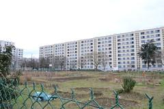 Lyon jardins potagers 2 (Le pré Sensé)
