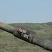 M1 Abrams gun barrel, Iron Fist 2011 exercises.