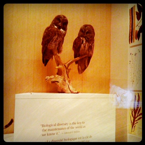 owls, conservation