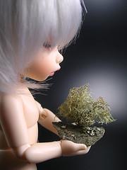 HEALING (petrajanssen) Tags: tree bjd lichen fairyland pf ante petrajanssen pukifeeante naikiri