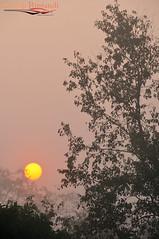 Misty morning at Chitwan