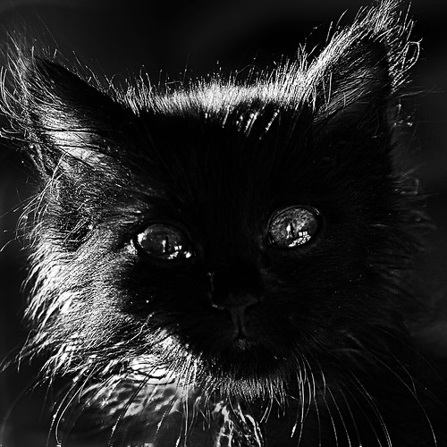 the eyes of the young cat