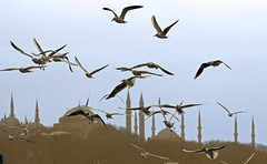 getting near to Istanbul (smokykater - 200k+ views) Tags: birds turkey boat seagull istanbul mosque bosporus minarett mygearandme