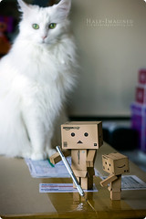 Box Opening Extras (3 of 5) (AtomicSpaceKitty) Tags: cats white mainecoon danbo revoltech danboard