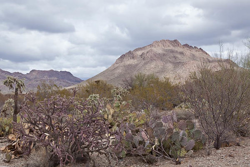 Purples, Yellows, Greens in the Desert