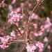 Les printemps arrive