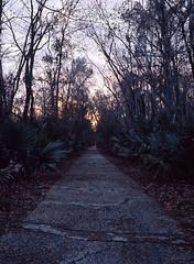 Jean Lafitte Preserve (Filippo He) Tags: sunset mediumformat louisiana barataria mamiya645protl fujirms jeanlafittenationalhistoricalparkandpreserve