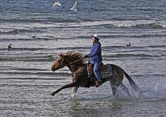 Stanley Park (Kerri-Jo) Tags: ocean city beach vancouver ride pacific run seawall riding stanleypark steven horseback thoroughbred tikka gallop akhalteke