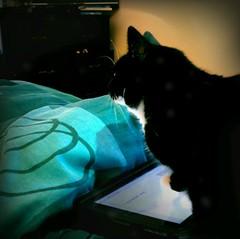 Meow-Pad