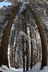 """Stonehenge"" (atralux) Tags: trees winter woman sun snow austria hiking sony fisheye stonehenge winterwonderland a900 atralux"