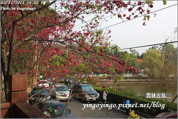 雲林古坑_20110227_I6545