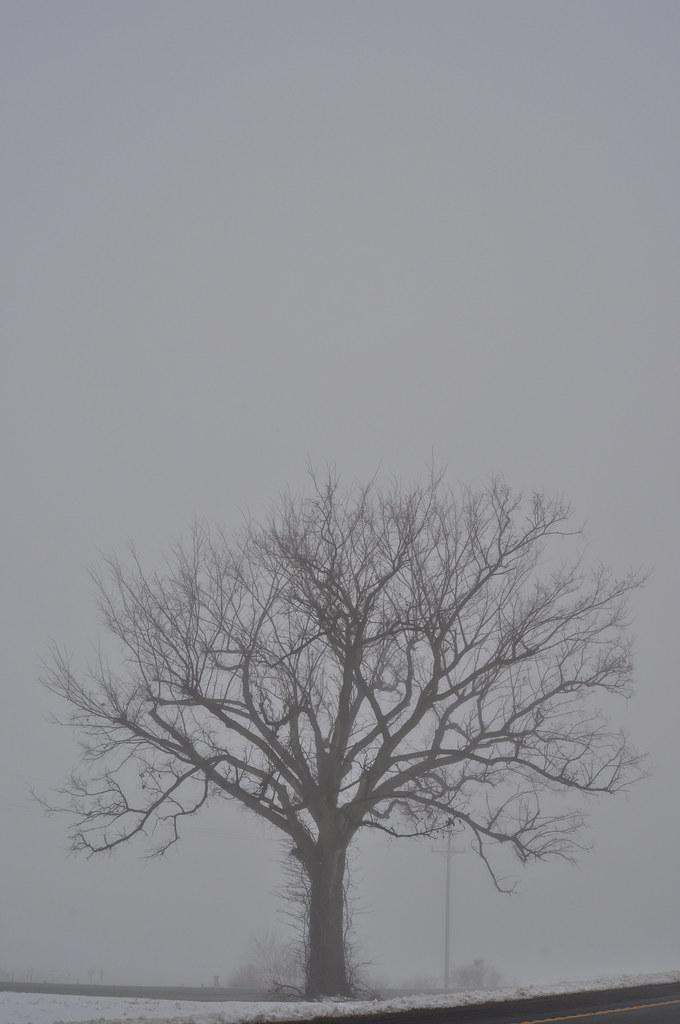 Dense Fog | 02/27/2011