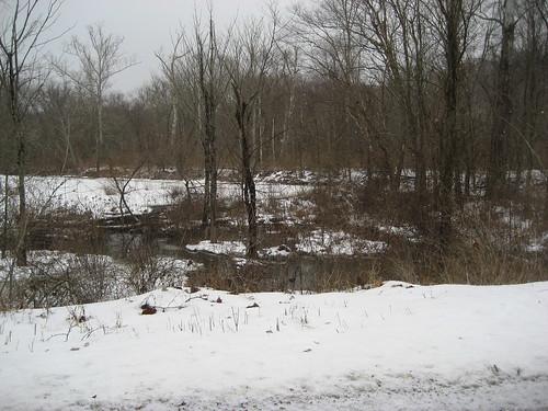 Tansky's Marsh