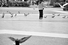 (Noa Ka) Tags: world barcelona life street city people urban bw bird art birds blackwhite spain nikon europe emotion candid d90 nikond90