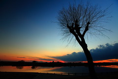 Serenity (Spice  Trying to Catch Up!) Tags: blue sunset sky tree art nature water silhouette japan clouds canon river photography eos photo twilight asia flickr colours image spice january picture vivid blogger livejournal   5d    facebook friendster multiply  2011 twitter ibarakiken  canoneos5dmarkii  oltusfotos panoramafotogrfico