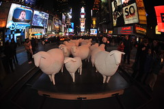 """COUNTING SHEEP""   IN TIMES SQUARE  ..."