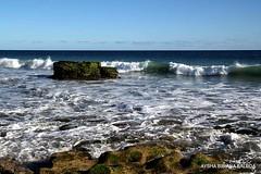 Coleccin: Mar y Duna se funden. Playa de Maspalomas G. Canaria (Aysha Bibiana Balboa) Tags: paisajes atardecer agua arboles playas dunas orilladelmar cayados playadelinglesgrancanaria playademaspaloma reservanaturalplayademaspalomasgrancanariaislascanarias