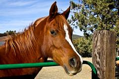 Meet Corona! (Kathy~) Tags: horse animal herowinner fromyour1stpage ultraherowinner gamesweep 15challengeswinner friendlychallenges