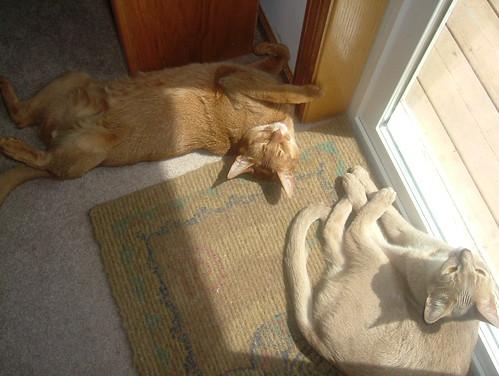 Phoenix Pharaoh Sunbathing