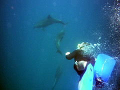 3-9 floreana, dolphins 047 colored