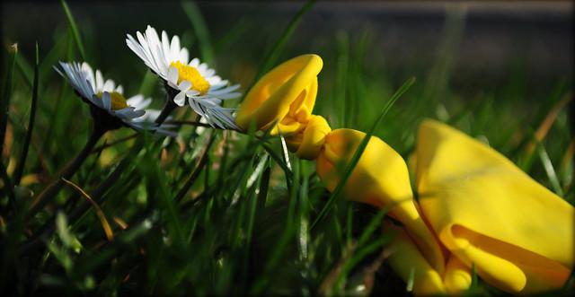 explota la primavera