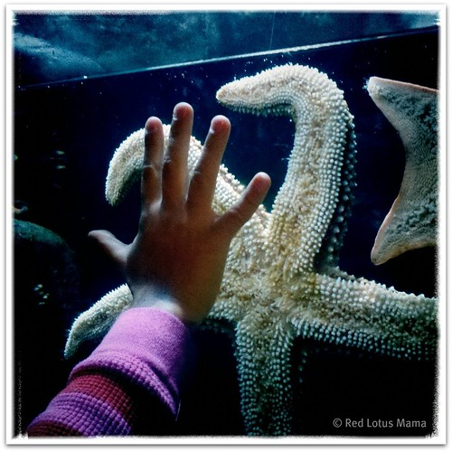 Starfish @AquariumPacific