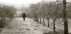 nothing lasts forever (Timoleon Vieta II) Tags: light portrait bw blur landscape nikki bokeh selftaught existence timoleon finalwalkonanearlywintermorningthroughtheorchard endofdepartureseries