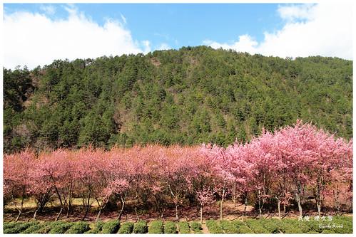 2011-03-04 陽明武陵 283 r