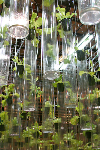 lettuce lab