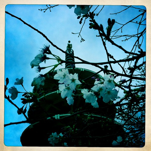 Cherry Blossoms and Pagoda