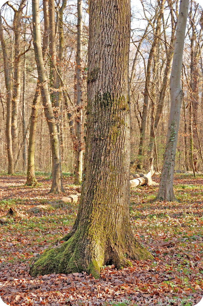 Spring Forrest Veyrier 2.2 bis