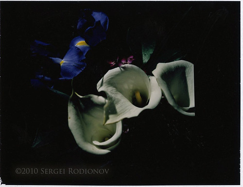 Instant film project: flowers