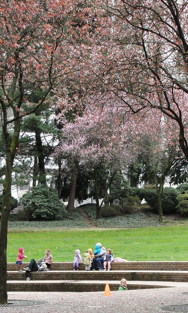 Park with pink blossoming trees and little children at recess from downtown day care