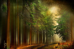 ~~~mystical forest ~~ (jmb_germany) Tags: allxpressus panoramafotografico jmbgermany mygearandme mygearandmepremium mygearandmebronze mygearandmesilver mygearandmegold mygearandmeplatinum mygearandmediamond aboveandbeyondlevel1 aboveandbeyondlevel2