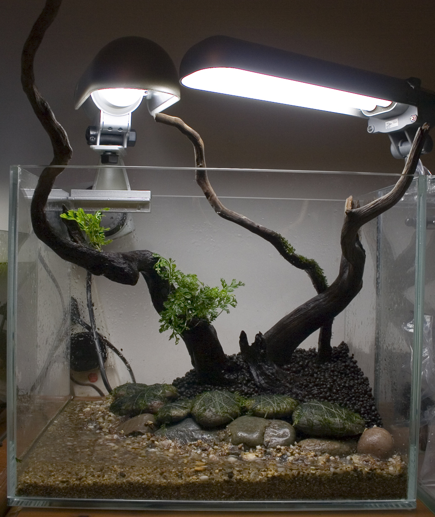 35cm Nano shrimp tank | AquaScaping World Forum