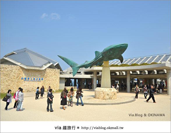 【沖繩景點】美麗海水族館~帶你欣賞美麗又浪漫的海底世界!2