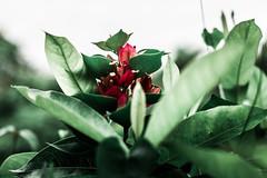 Botanical Series12 (Elena Picart) Tags: elenapavlova floralartprint interiors modern minimal flowerphotographs floralart botanicalprint flowerphotography garden spring decor naturedecor blossoms picargallery