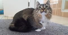 Dizzie Rascal via http://ift.tt/29KELz0 (dozhub) Tags: cat kitty kitten cute funny aww adorable cats