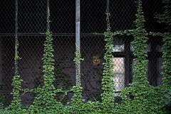 Fallout (Zachary Cava) Tags: parthenocissus asylum abandoned richardsonolmstedcomplex hotelhenry buffalony falloutshelter ivy naturetakesover manvsnature fallout apocalypse abandonedhospital urbanecology theworldwithoutus urbex coldwar radioactive civildefense nuclearexplosion shelter